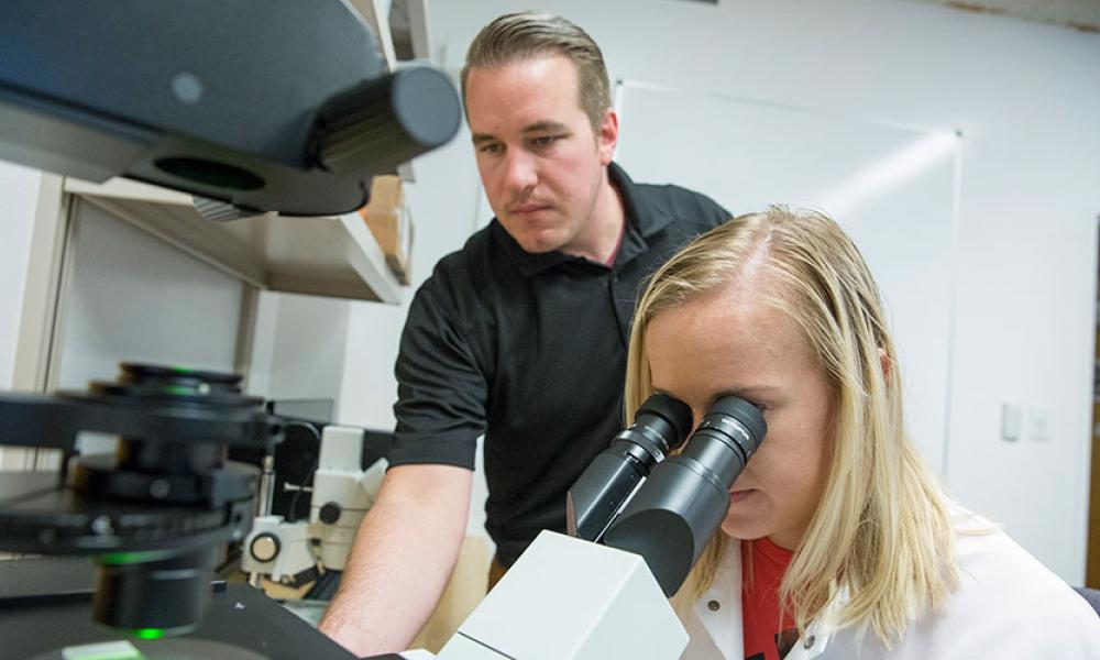 Assistant Professor Jimmy Bagley and grad student Kaylie Marsh examine muscle tissue samples
